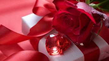 358581 red rose with the pretty gift p